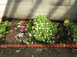 2010年4月花壇.JPG